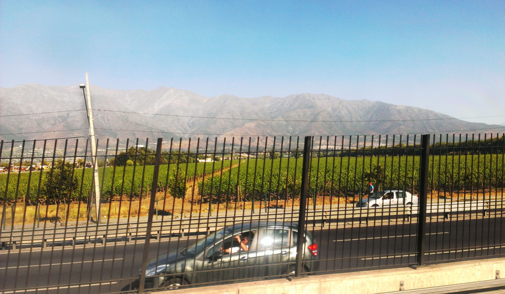 Andes and a vineyard in the middle of the city